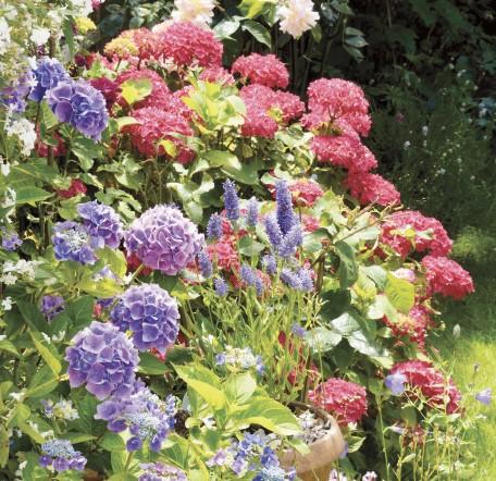 GC149 Summer Garden