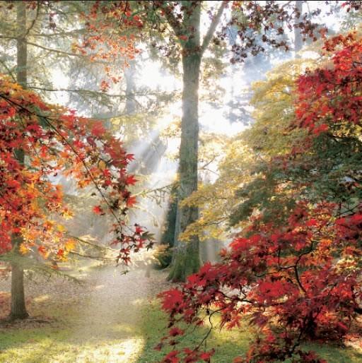 GC218 Autumn Morning