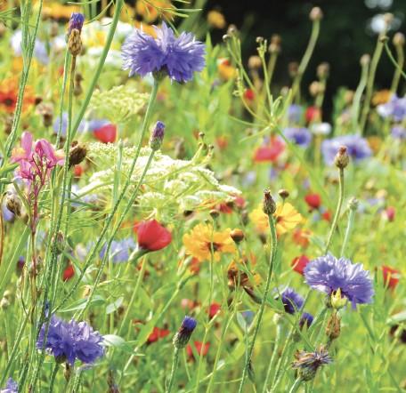 GC79 Wild Flowers