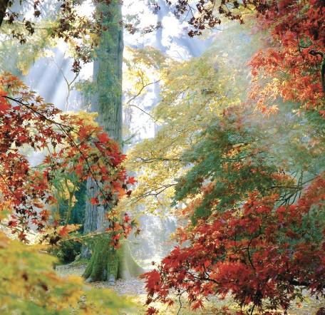 GC296 Autumn